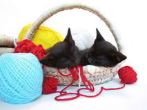 Two kitties sleeping in the basket with yarn Stock Photo