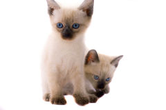 Two kitty Stock Image