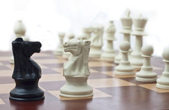 Two Knights. Two Chess Knights Facing Each Other Royalty Free Stock Images