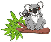 Two koalas on the branch. Smiling mother koala with little koala sitting top on the branch of tree Stock Image