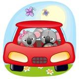 Two Koalas in a car Stock Photo