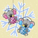 Two Koalas in a fur headphones Stock Photos