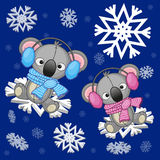 Two Koalas. At the snowflakes Royalty Free Stock Photography