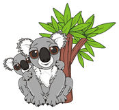 Two koalas under the tree. Mother koala sitting with her baby on the her neck under a lettle tree Royalty Free Stock Photos