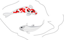 Two  koi carps Stock Photos