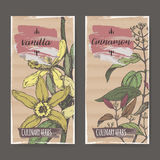 Two labels with Vanilla, Cinnamon color sketch. Culinary herbs collection. Royalty Free Stock Image