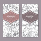 Two labels with vanilla and cinnamon sketch on background. Set of two labels with Vanilla planifolia aka Vanilla and Cinnamomum verum aka cinnamon sketch on Stock Photography
