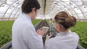 Two laboratory technicians doing research standing in greenhouse of agro holding stock video