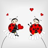 Two ladybirds. Sitting on white flowers stock illustration