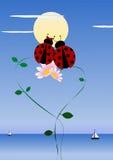 Two ladybirds Stock Image