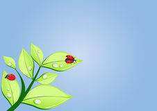 Two ladybugs Stock Image