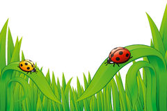 Two Ladybugs on grass. Stock Photos