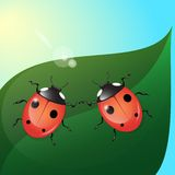 Two ladybugs Royalty Free Stock Photos