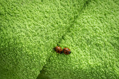 Two ladybugs on green towel Royalty Free Stock Image