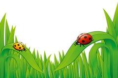 Free Two Ladybugs On Grass. Stock Photos - 14736693