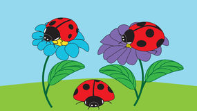 Two ladybugs sit on flowers and one ladybird crawls on the ground Royalty Free Stock Photography