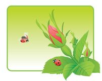 Two ladybugs on the wild rose Royalty Free Stock Photography