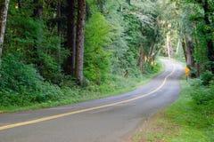 Two Lane Road Cuts Through Dense Tree Canopy Hoh Rainforest Stock Photo