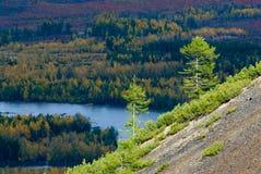 Two larch. Sunlit slope. Buyunda River, autumn Stock Photo