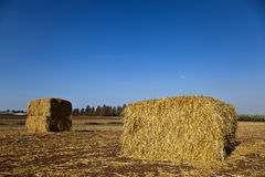 Bales of Hay in a Field. Two large bales of hay located in the field it grew in Stock Photo