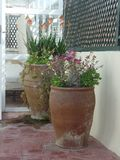 Two large flower pots on a Moroccan roof terrace. In Essaouira stock image