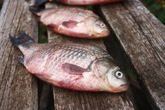 Two large fresh carp lying on a wooden table. Two  fresh carp fish lying on a rough wooden table Royalty Free Stock Photo