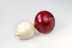 Two Large onion Stock Image