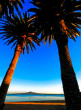 Two large plam trees with beach in the background Stock Photo