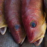 Two large sea fish red color scales, fins are yellow and blue, round eyes, marketplace fishermen, India. Royalty Free Stock Image