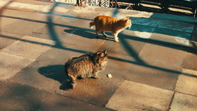 Two large stray cat sitting in the winter. One cat red second gray stock footage
