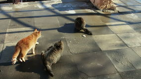 Two large stray cat sitting in the winter. One cat red second gray stock video