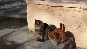 Two large stray cat sitting in the winter. One cat red second gray stock video footage