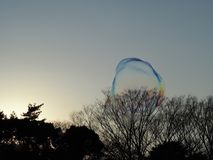Two large wobbly bubbles in the sunlight above the park, reflecting a rainbow of colors and just about to burst. Royalty Free Stock Image