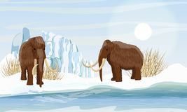 Two large woolly mammoth. Snow and glacier. Dry frozen grass by the sea. Prehistory animals. Ice Age. Extinct animals of Siberia, Eurasia and North America stock illustration