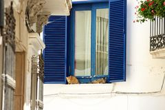 Two lazy cats relaxing on windowsill Stock Image