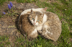 Two lazy cats resting in the sun Stock Photos