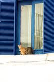 Two lazy cats sitting on windowsill Stock Images