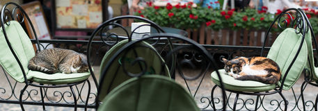 Two lazy cats sleeping on antique chairs Stock Photos