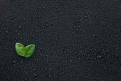 Two leaf lying on the wet black background Royalty Free Stock Images