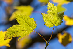 Two leafs. With details in backlight royalty free stock photos