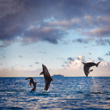 Two leaping dolphins playing with girl in sea. Oceanview seaview with nice sea surface. Two playful dolphins play with girl on water under cloudscape at sunset Stock Photo