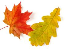 Two leaves Royalty Free Stock Photo