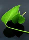 Two Leaves Royalty Free Stock Image