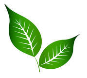 Two leaves. Two  green leaves in white background Royalty Free Stock Image