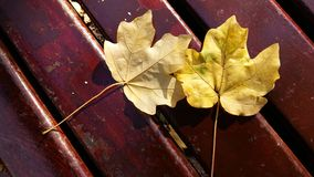 Two leaves. On the bank Royalty Free Stock Images