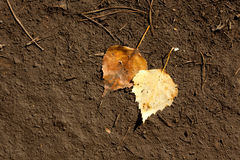 Two leaves lying in the dirt Royalty Free Stock Photos