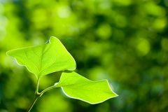 Two leaves macro Royalty Free Stock Images
