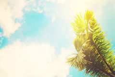 Two Leaves of Palm Trees on Blue Sky. Toned Effect Royalty Free Stock Photos
