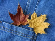Two leaves in pocket Royalty Free Stock Photography