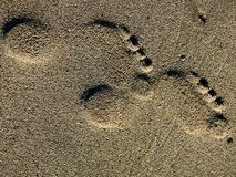 Two left feet. Footprints of the sand of Flakstadstrand, Lofoten islands royalty free stock image